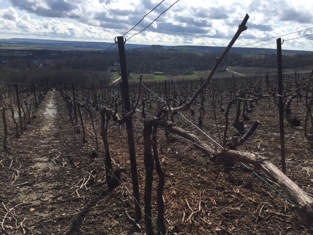 Coulommes Vineyard