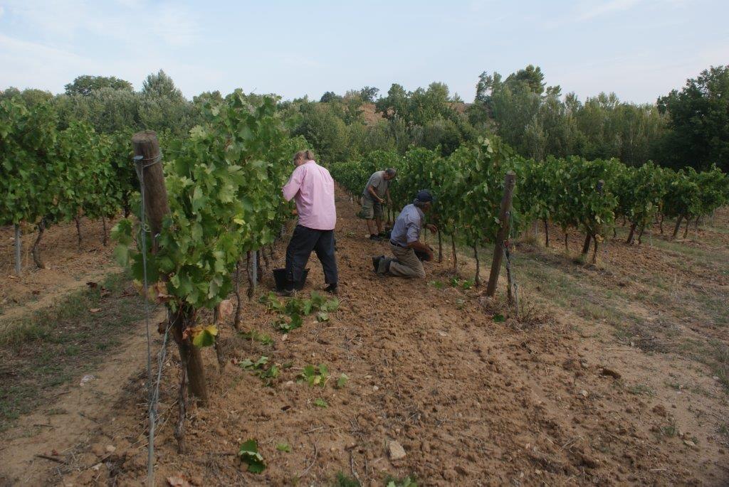 3-men-harvesting