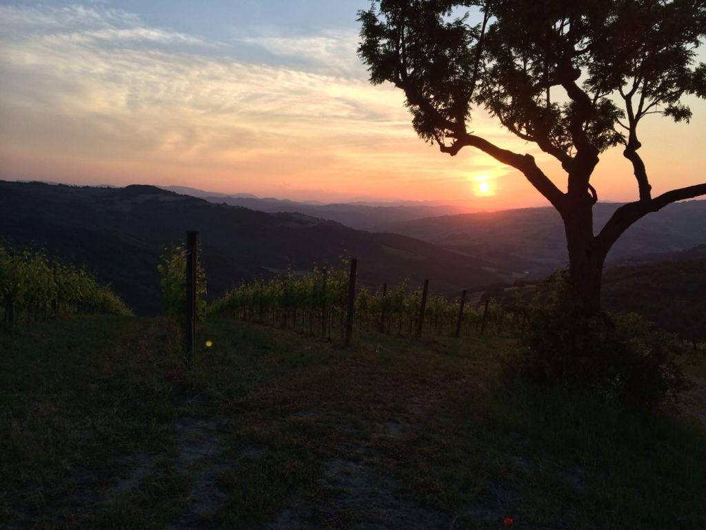 tramontone