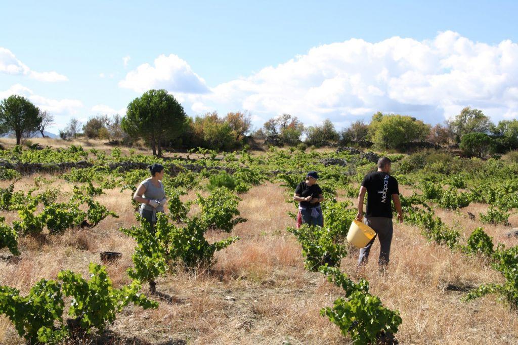 malaprteBush vineyard & workers (Custom)