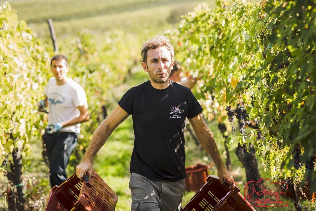 gianluca harvest time