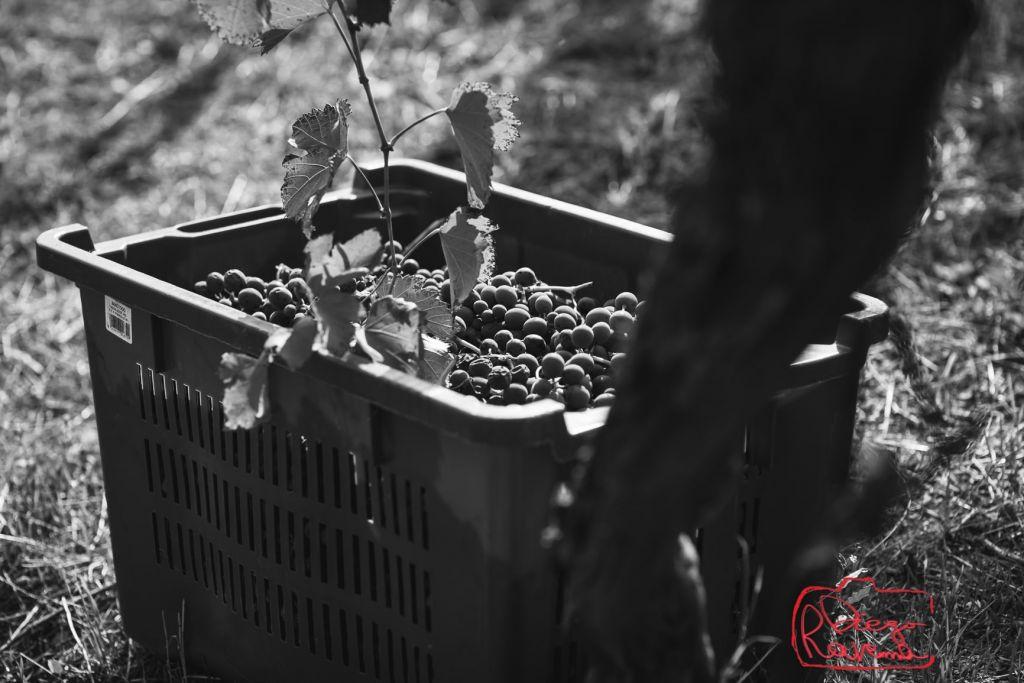 harvest's bin