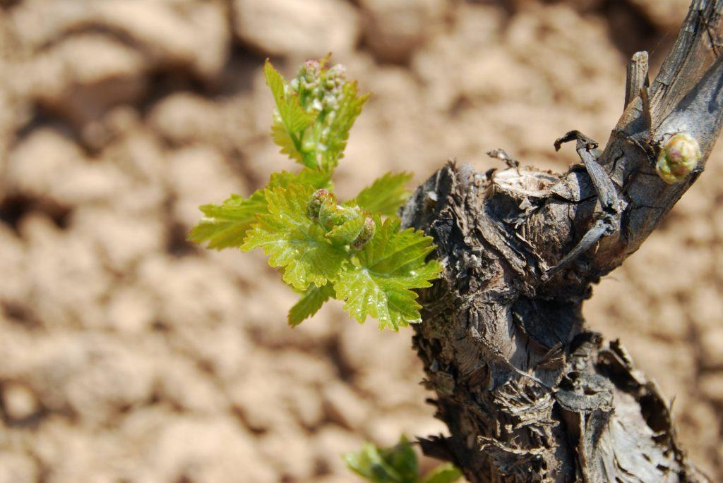 Vine's detail (Custom)